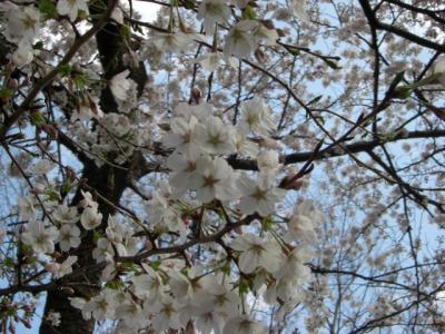 2008.3.27kureapo初お散歩 021blog
