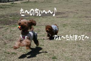2008.4.1平日ドッグラン(アポ2回目) 057blog