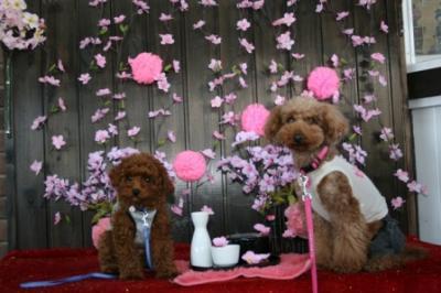 2008.4.1平日ドッグラン(アポ2回目) 140blog