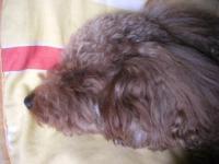 2008.4.7kureapolo狂犬病予防注射 002BLOG