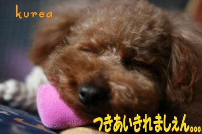 2008.4.11散らない桜(実相時)クレアポロ 011blog