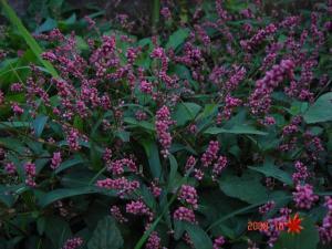 DSC01016野花