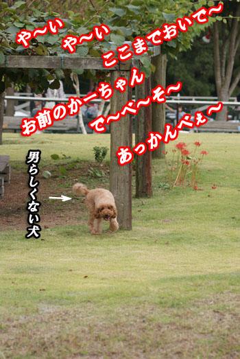 20090924-15.jpg