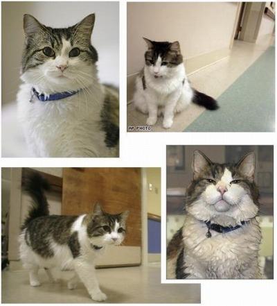 a special cat