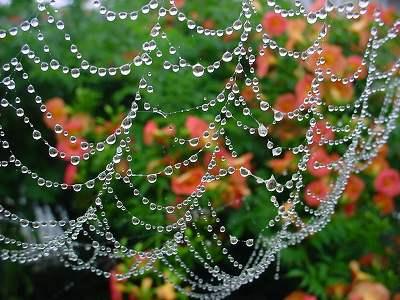 蜘蛛の巣 in the rain