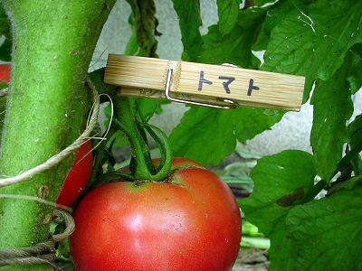 トマトの名札