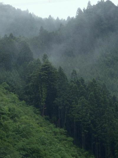 霧の奥秩父