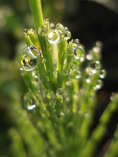 水玉の向こうの花は