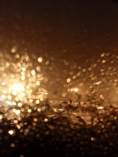 窓の外は大雨