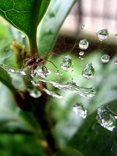 蜘蛛の巣と雨粒