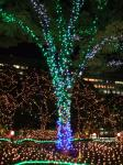 tree_illumination