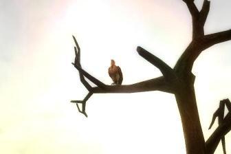 死を運ぶ鳥