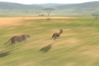 チーターの狩り