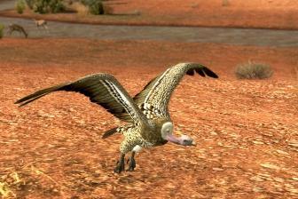 飛び立つハゲワシ