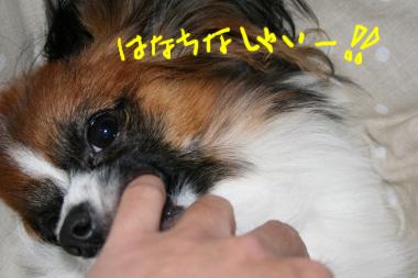 IMG_2477_12.jpg