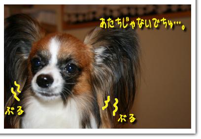IMG_2650.jpg