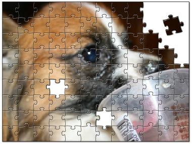 jigsaw1634239_1.jpg