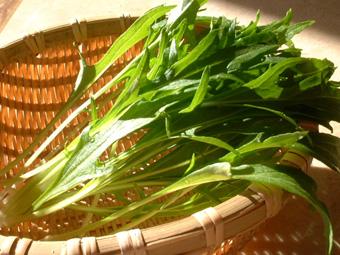 水菜収穫1130