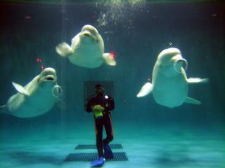 島根県立しまね海洋館