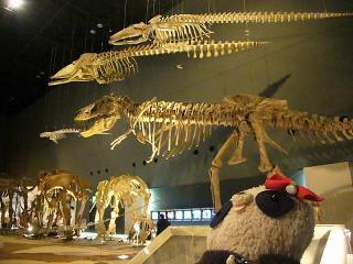 恐竜の化石もいっぱい