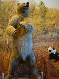 どーんアラスカヒグマ