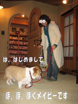 メイビーお届け紀行 2008 2 10、11 006''