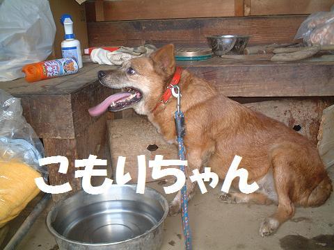 間宮 H20.8.3.7'