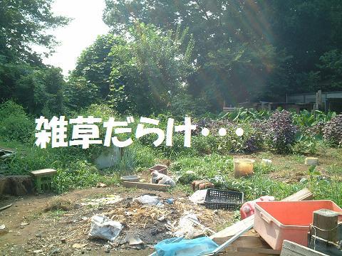 間宮 H20.8.3.15'