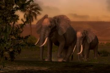 AFRIKA#8482;_22