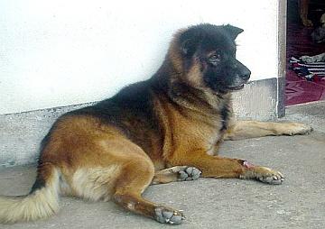 siko05