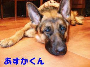 コピー ~ DSCF0194