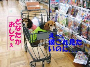 コピー ~ DSCF0536