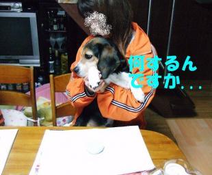 コピー ~ DSCF0366