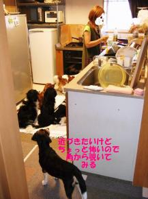 コピー ~ DSCF0564