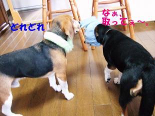 コピー ~ DSCF0819