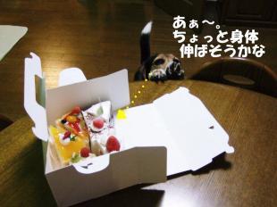 コピー ~ DSCF0822