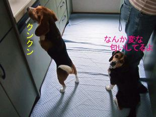 コピー ~ DSCF1003
