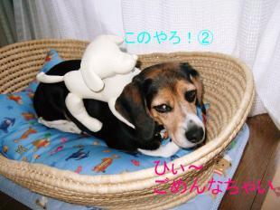 コピー ~ DSCF1027
