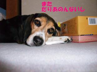 コピー ~ DSCF0161