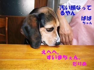 コピー ~ DSCF0410