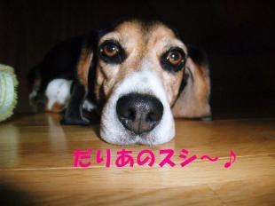 コピー ~ DSCF0632