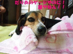 コピー ~ DSCF0787