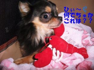 コピー ~ DSCF0867