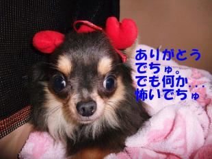 コピー ~ DSCF0864