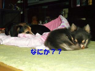 コピー ~ DSCF1139