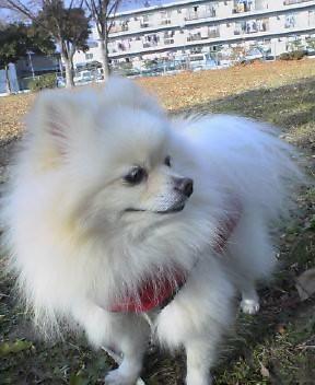 20051204犬がきた!