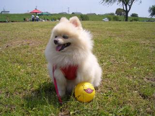 チィ、ボールが笑ってるよ.jpg
