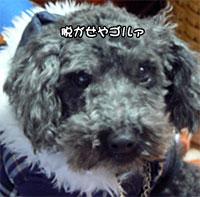 091220_b00300.jpg