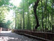 竹林コース
