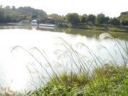 チョット寂しい池